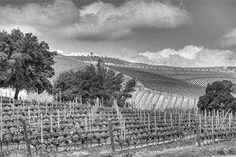 Greystone Daou Vineyards & Winery Event